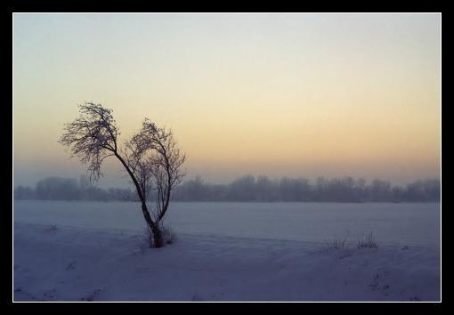 Strom v nelítostné zimě