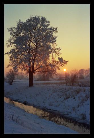 Strom v zimním zapadajícím slunci
