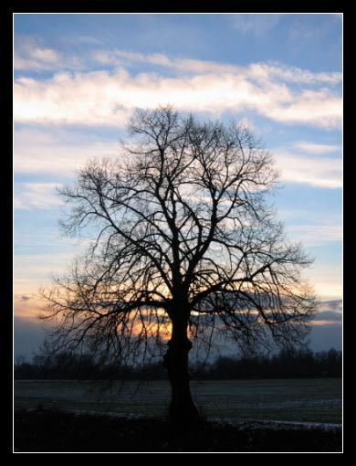 Mohutný strom v zapadajícím slunci na podzim