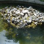 Želvičky - Národní zahrada - Atény
